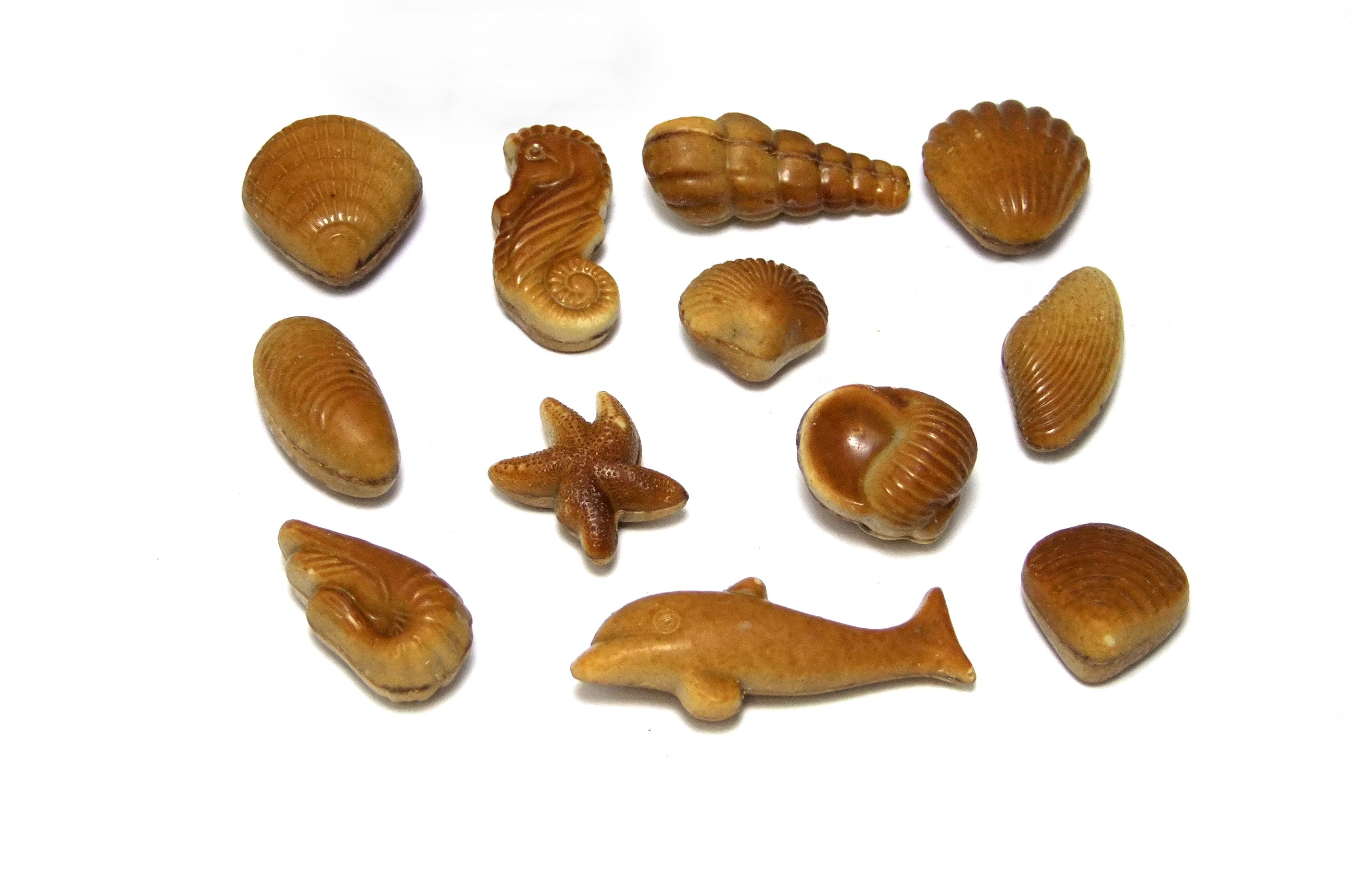 Dumon Sea Shells